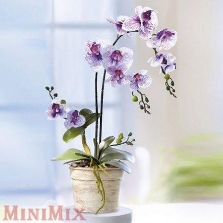 Orchidea cserépben